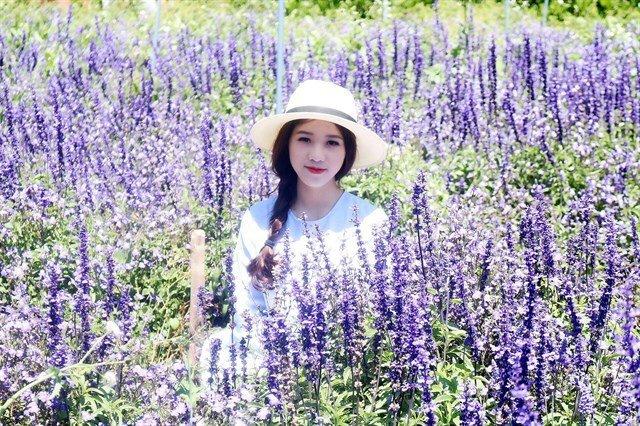 Check-in Cánh đồng hoa lavender đà lạt