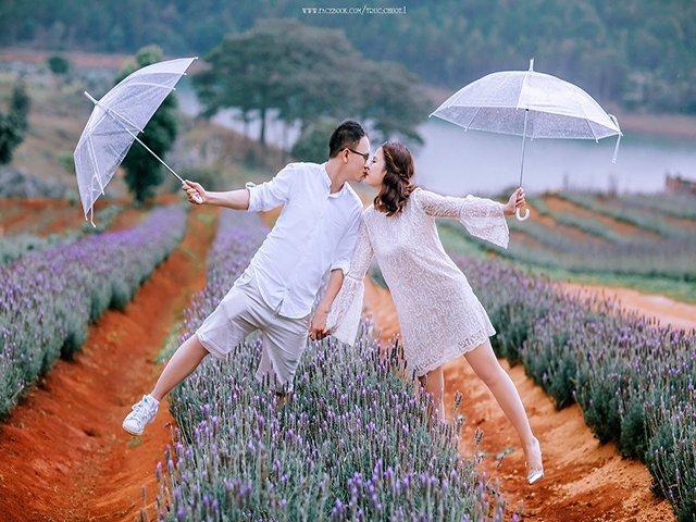 Chụp ảnh cưới tại cánh đồng hoa lavender đà lạt