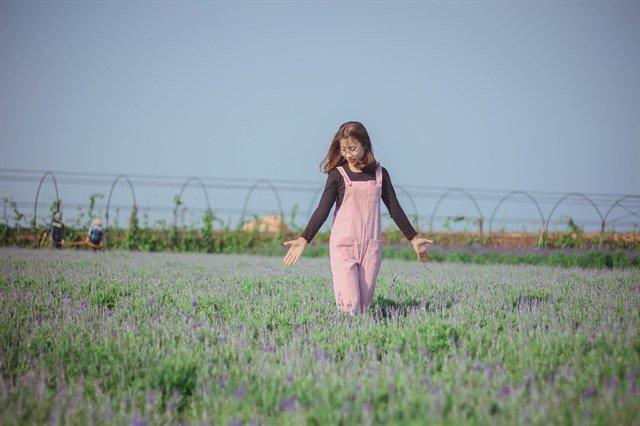 Check-in hoa lavender cầu đất