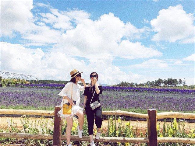 Chechk-in Hoa lavender cầu đất